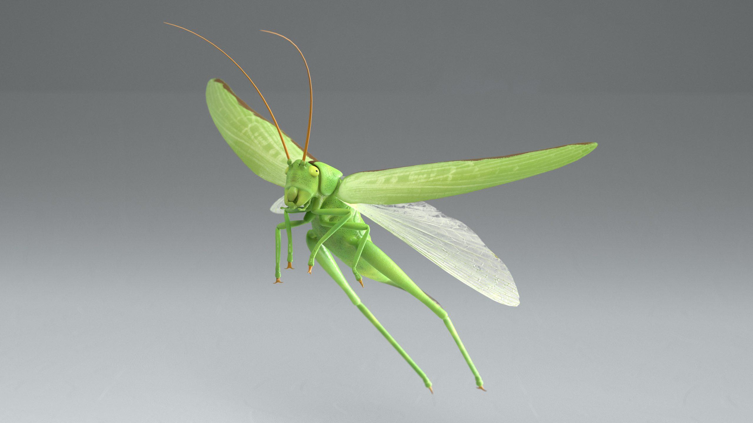 Groene Sabelsprinkhaan (Tettigonia viridissima) 3D Model