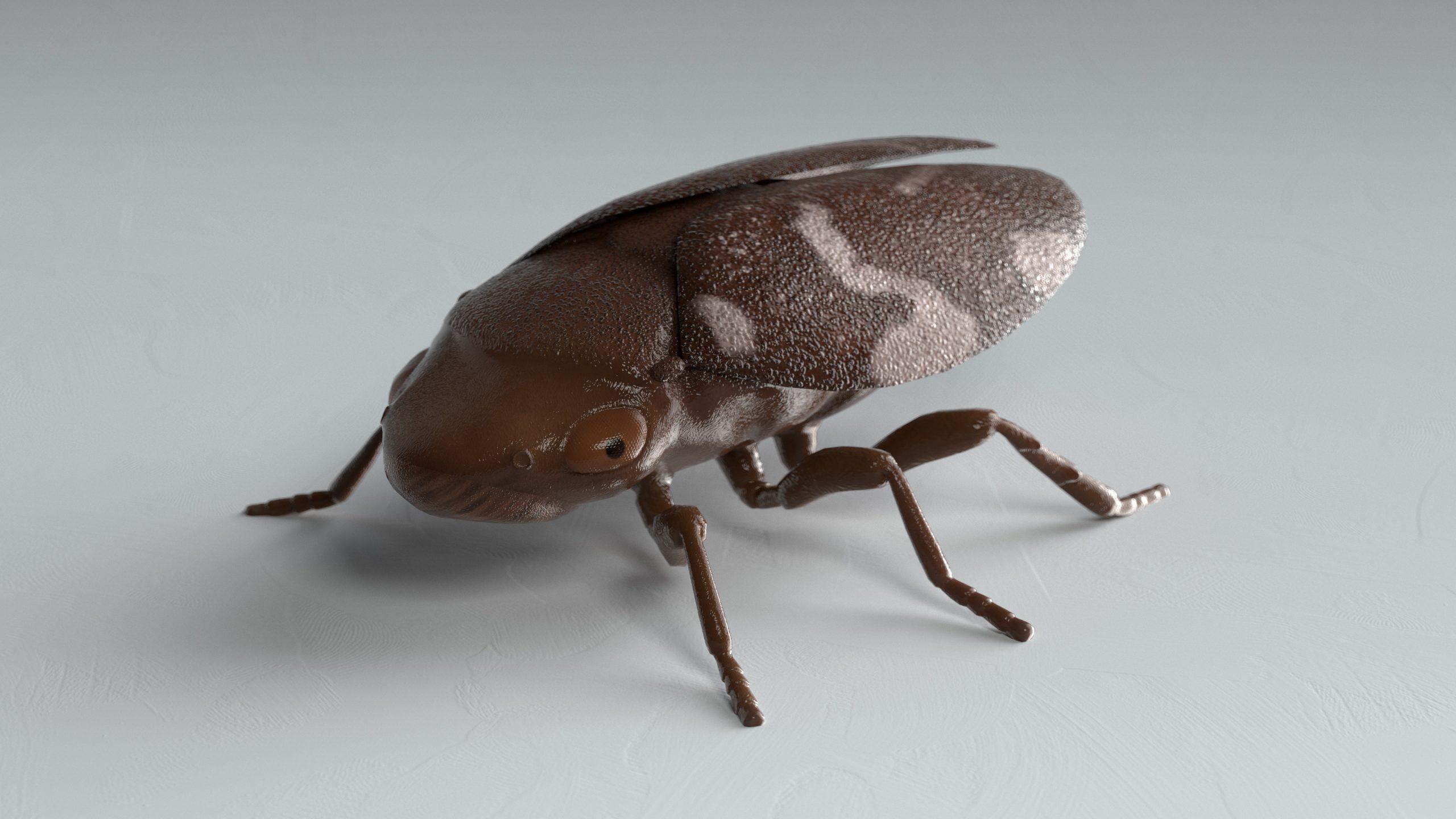 Spuugbeestje (Philaenus spumarius) 3D Model
