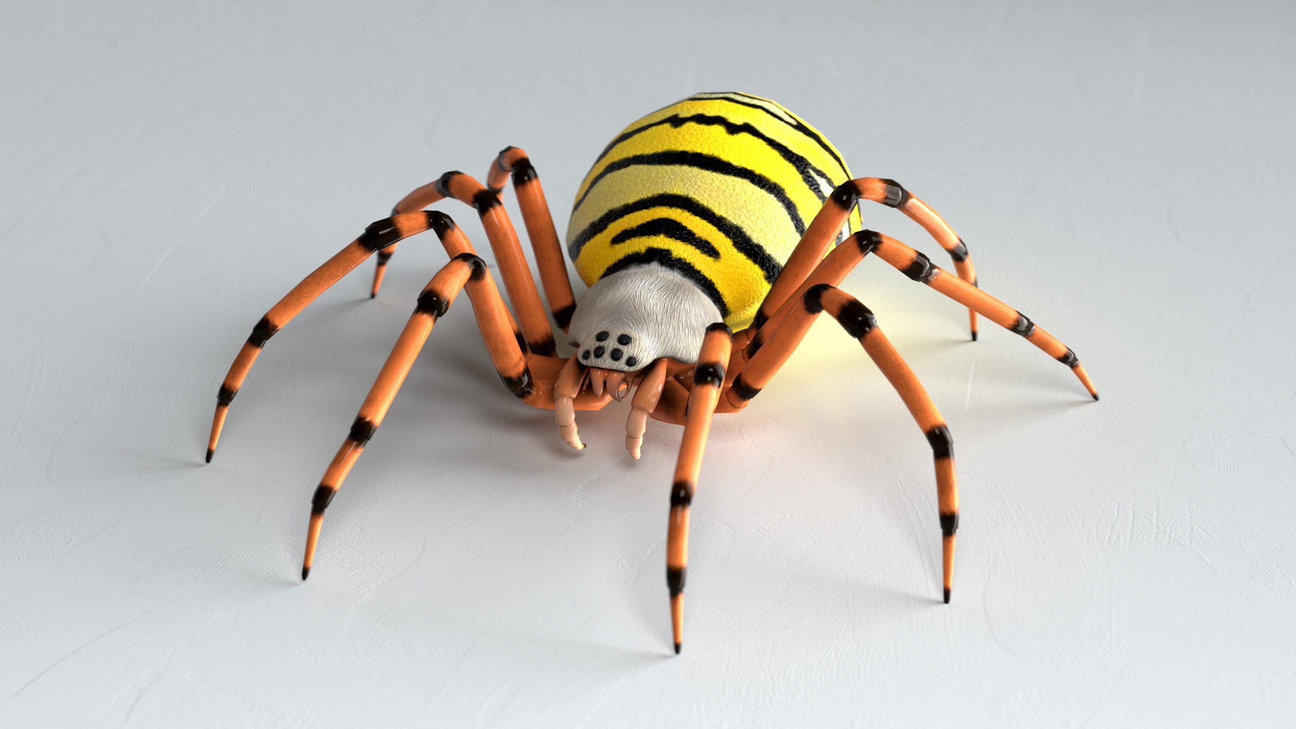 Wespenspin (Argiope bruennichi) 3D Model